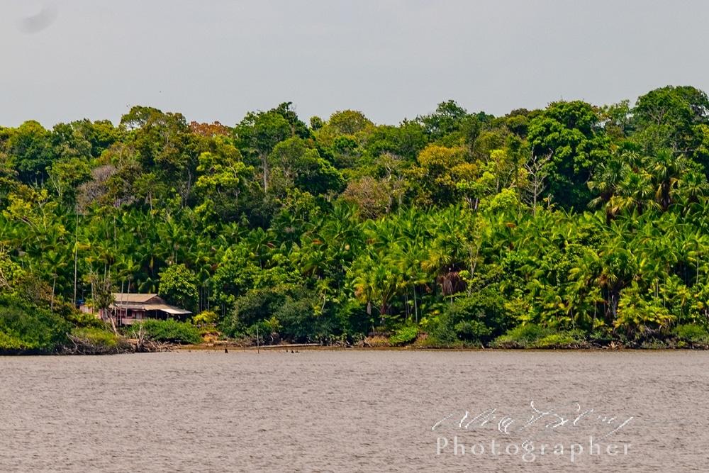 Home on the Amazon