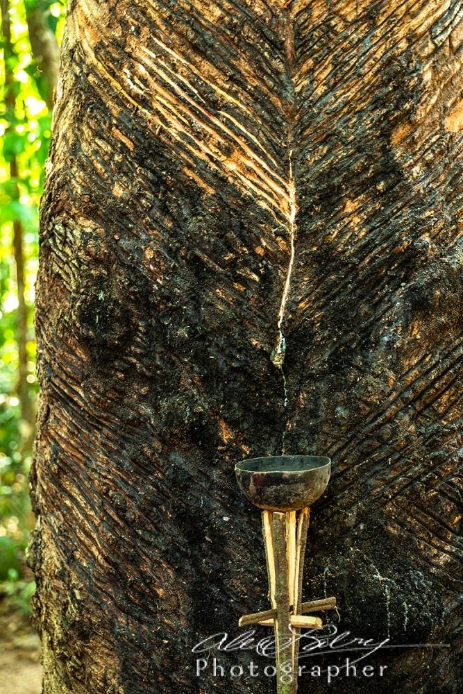 Rubber Tree Sap