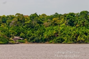 Home on the Amazon