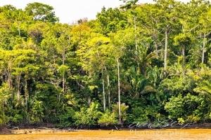 Typical Rainforest Scene