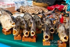 Piranhas for Sale