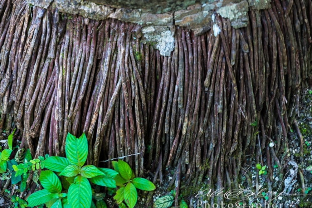 Botanical Palm Roots