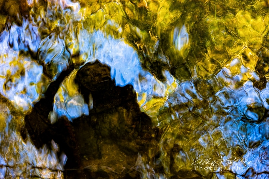 Self Portrait in Monet's River Garden