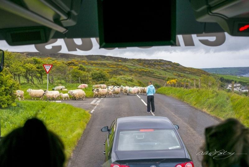 Sheeps Highway, County Cook, Ireland