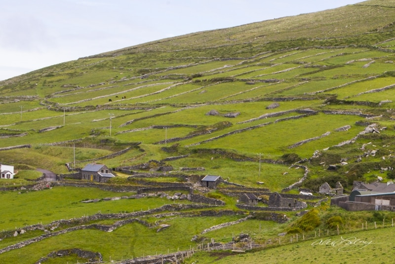 Irish Fields  County Cork