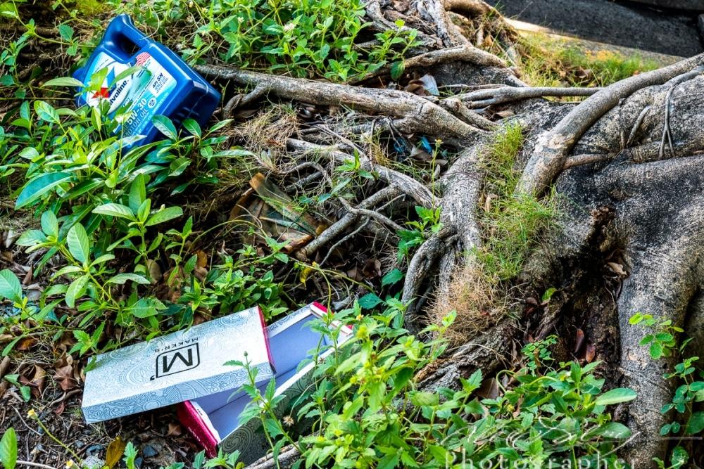 Tree Roots & Trash